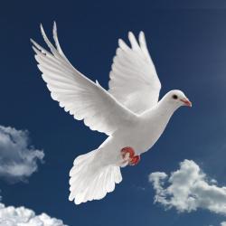 Sveti Duh